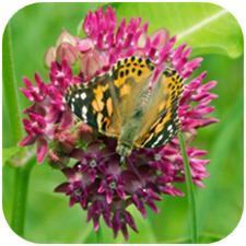 ButterflyGarden2